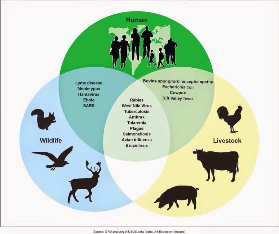 zoonotic disease fig from GAO report