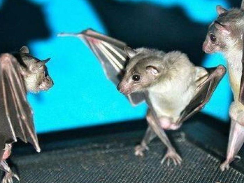 bats (3)