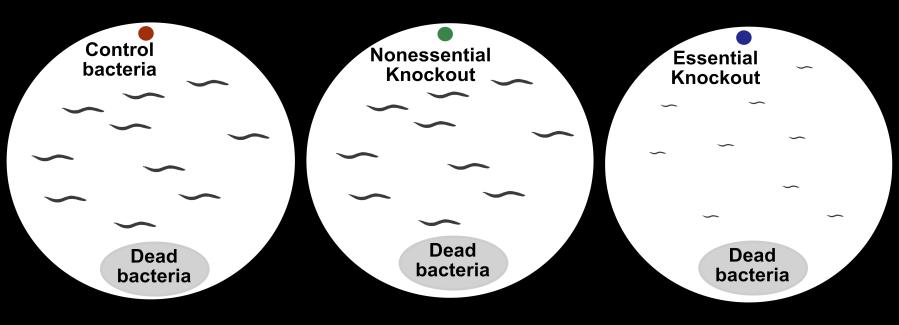 plate_diagram