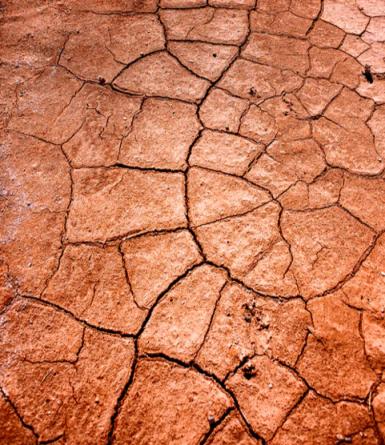 SoilCarbon