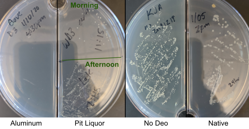 Armpit bacteria that grew over the course of the day, in different deodorant conditions.